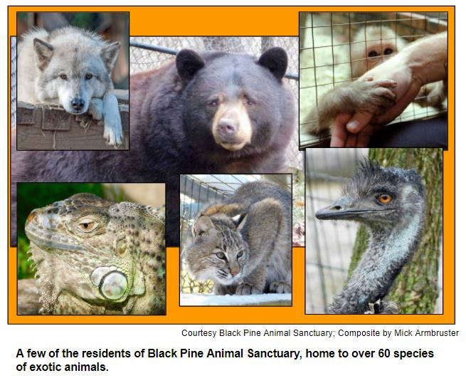 A few of the residents of Black Pine Animal Sanctuary, home to over 60 species of exotic animals.