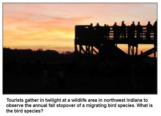 Tourists gather in twilight at a wildlife area in northwest Indiana to observe the annual fall stopover of a migrating bird species. What is the bird species?